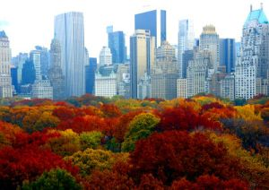 city-new-york-photo-central-park-fall-foliage-cc